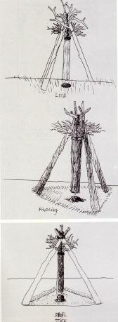 Hanging Tree sketch, Der Wald- Ein Zyklus
